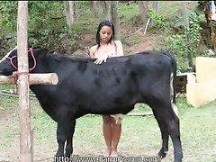 Hot chick showing this bull her body
